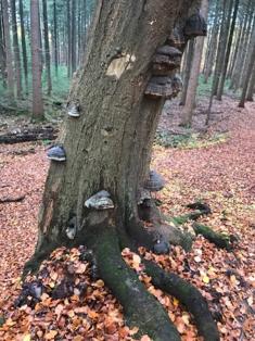 Als de bladeren vallen